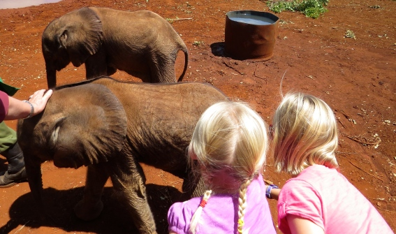 The girls reach out to pet the tiniest of the elephants