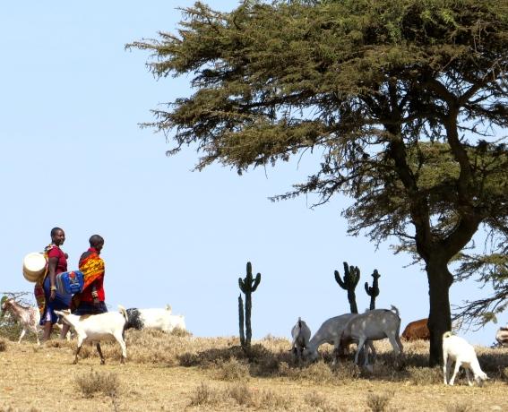 Maasai landscape