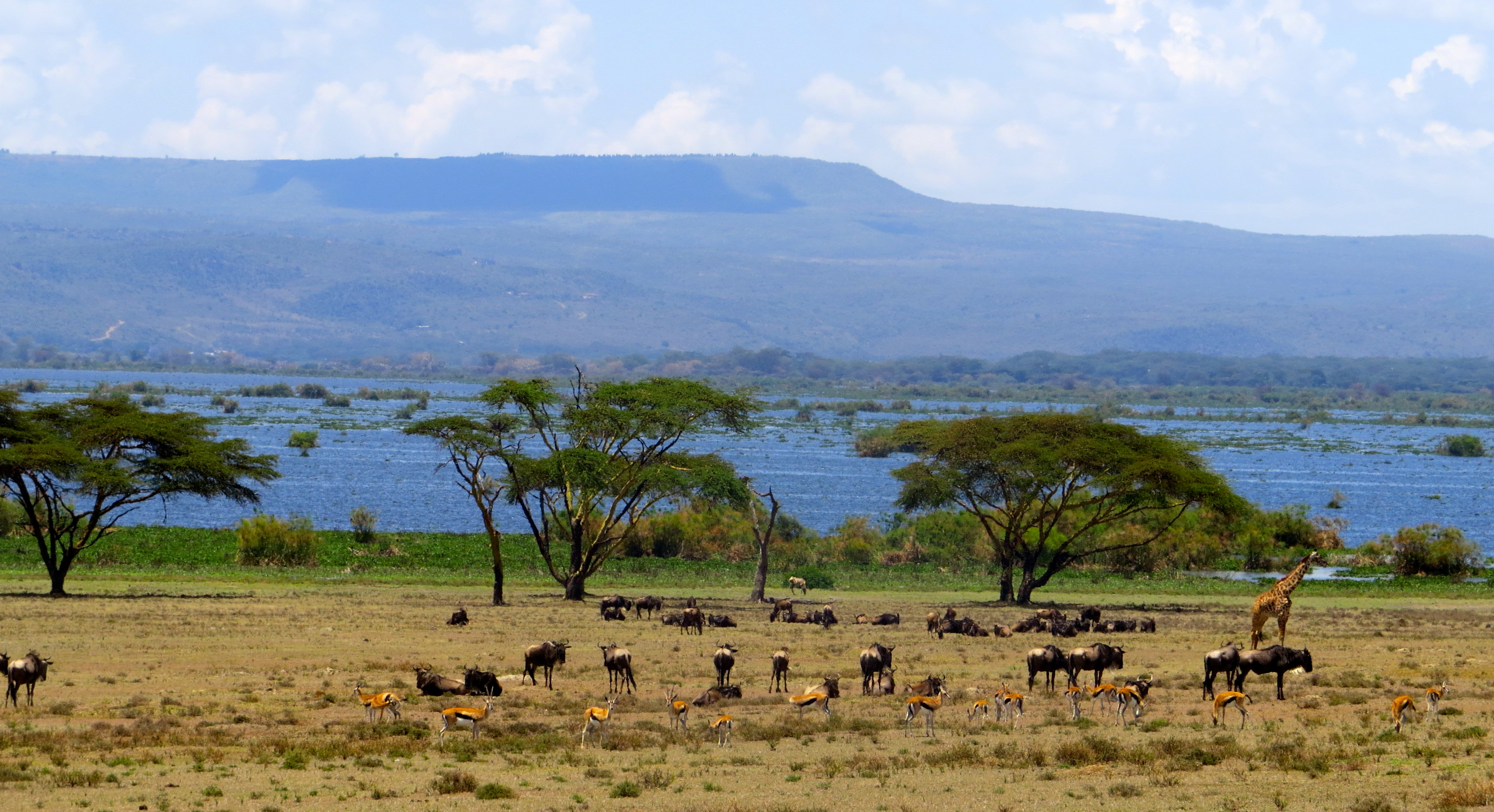 FUND-SAVE LAKE NAIVASHA WATER POLLUTION