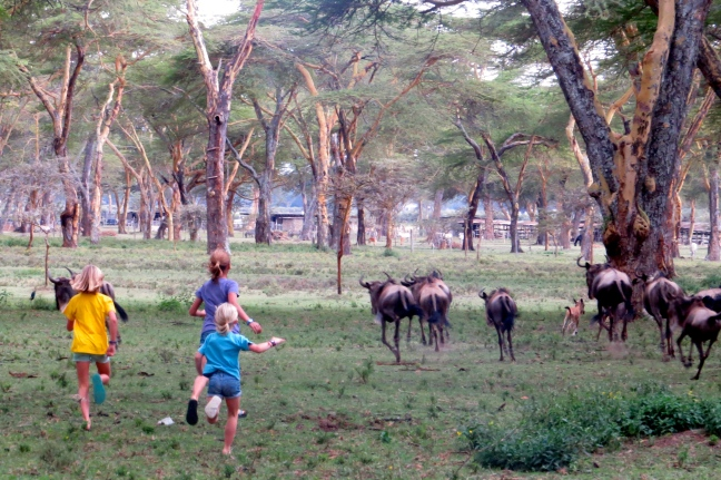 Running with wildebeests