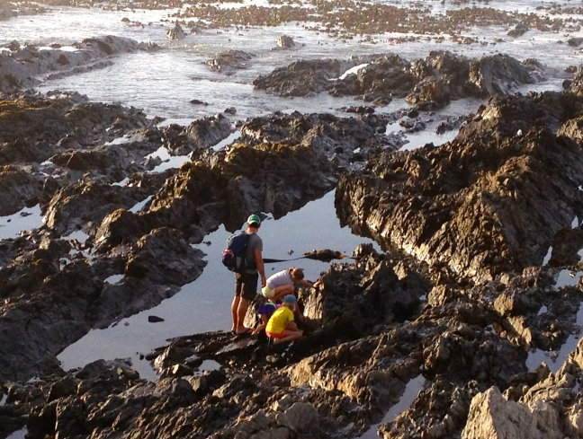 Exploring the Seapoint tide pools at the edge of the city
