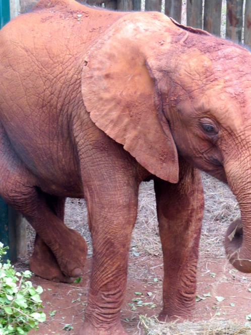 Lima Lima perfected the rear leg relaxation pose, elephant style