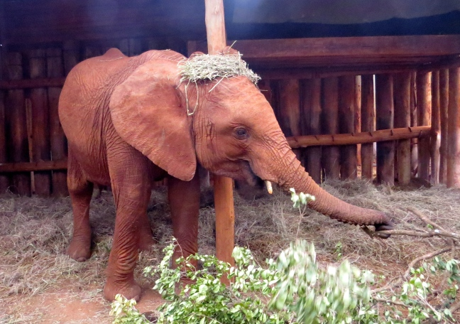 Sonje loved to throw hay on top of her own head - elephant fashion!