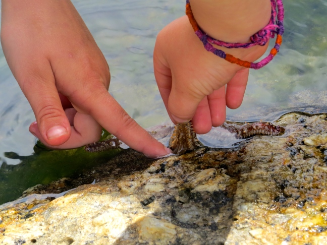 Zoe and Thayer work together to peel a starfish off the rocks
