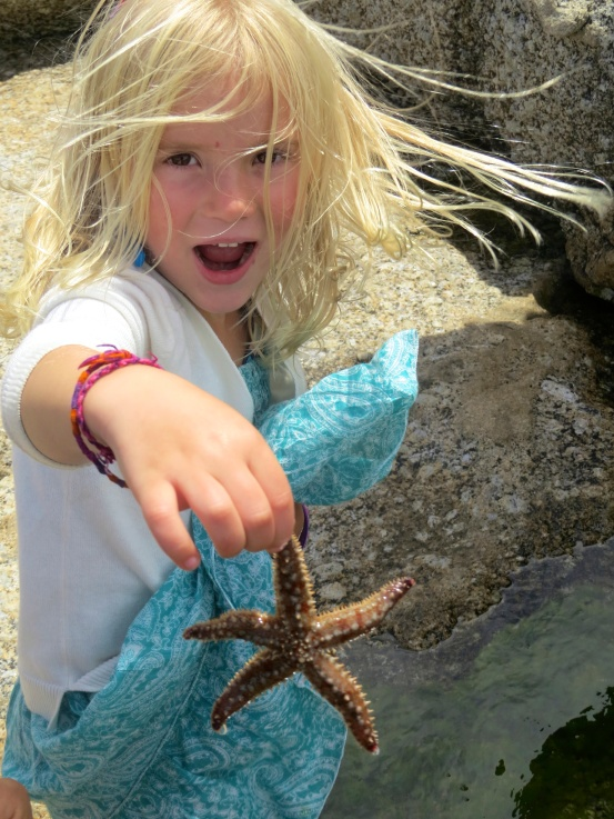 Starfish are amazing!