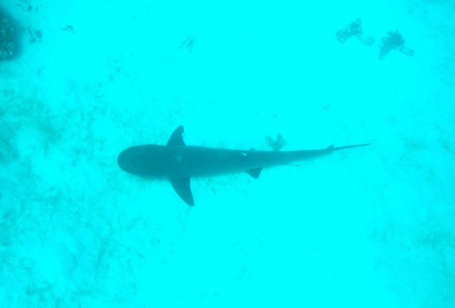 Lurking down on the sand, a real live shark!