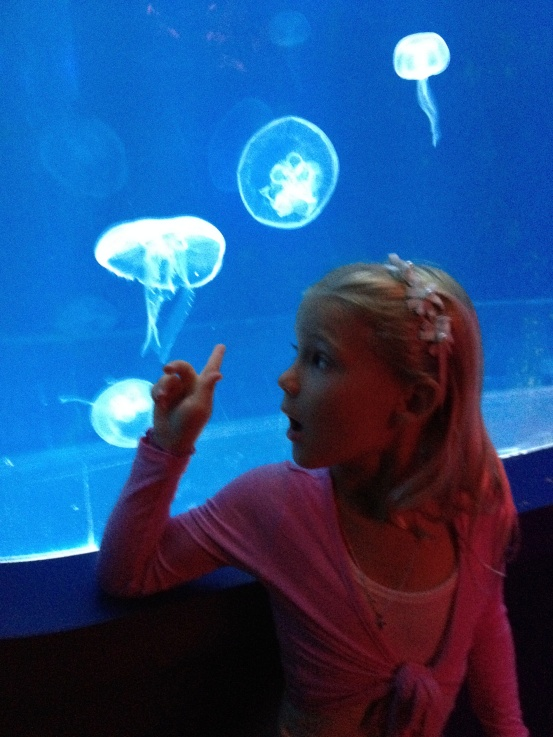 Cool jellyfish