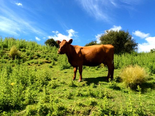 Farm animals wandered the hills all around us