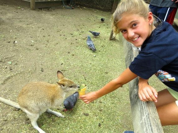 Schuyler loved feeding the kangaroos their wafer cones with hay