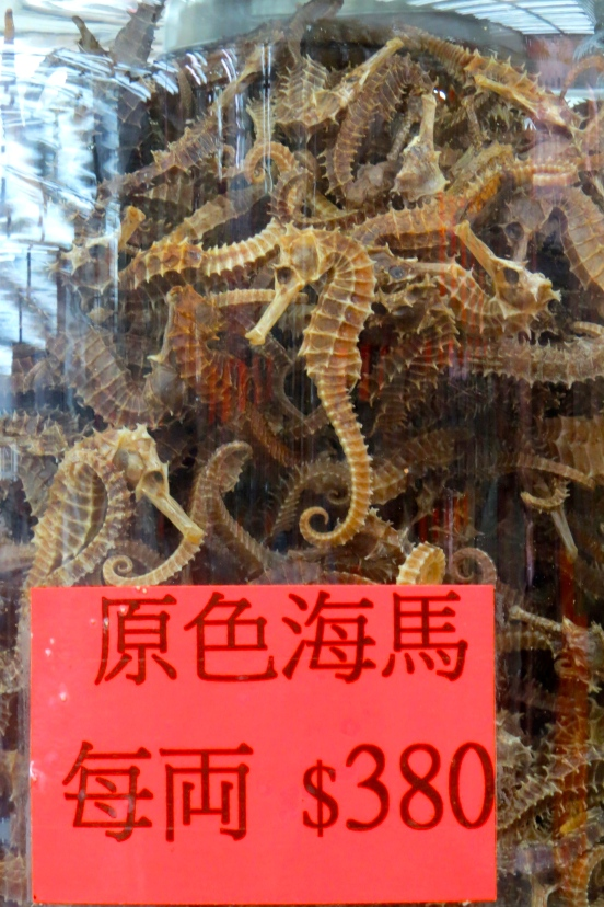 Sea Horses are used to make medicinal tea