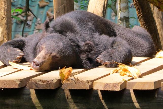 Bear, or rug?