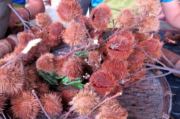 These are the nuts that contain Annatto seeds
