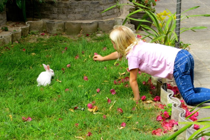 When not painting, Thayer spent her time woo-ing Mr. Wu's pet bunny that just hopped around his yard