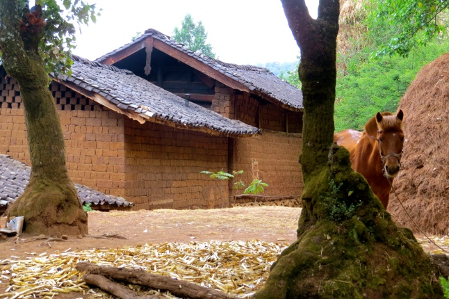 Traditional Naxi home (and horse) in the woods above Lijiang