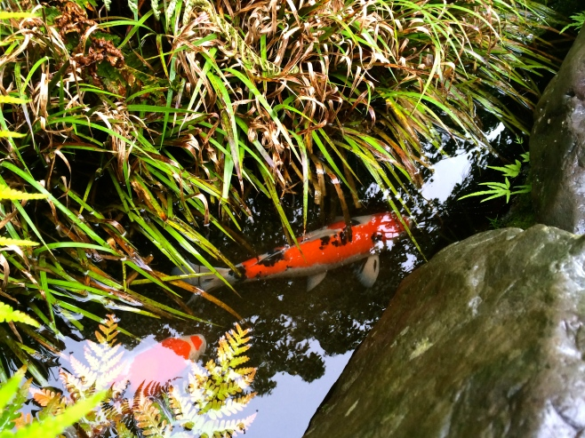 Koi ponds have been exciting for the kids to explore